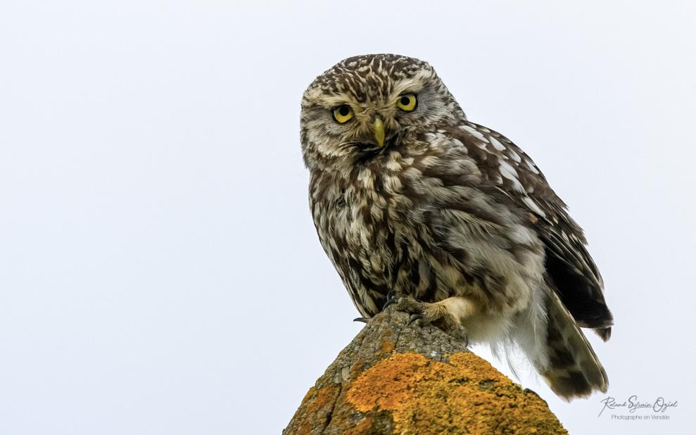 Où voir les oiseaux en Vendée