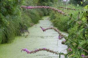 Canal du marais mouillé